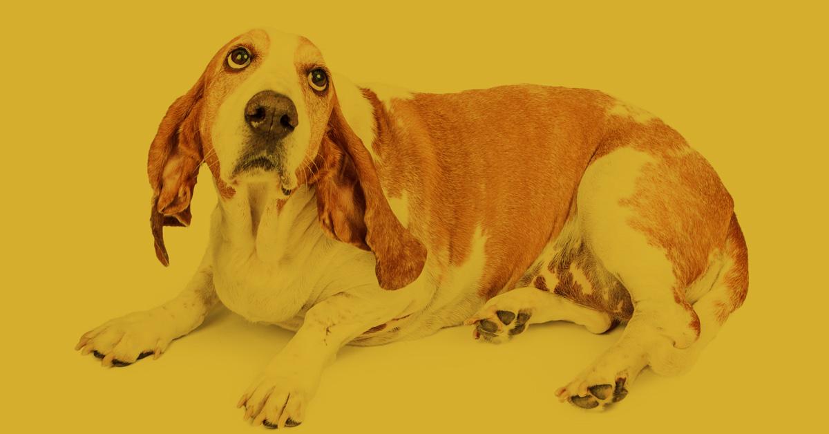 Vortrag Trennungsangst Akademie Hund Regensburg