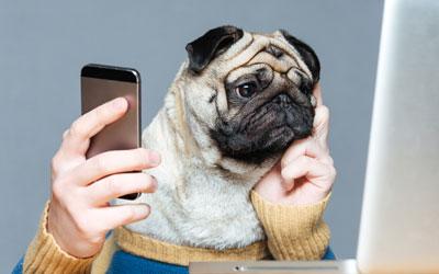 Datenschutz im (Video)-Hundetraining