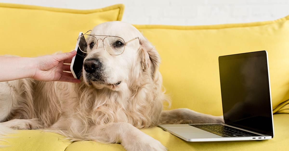 Video-Hundetraining und die DSGVO