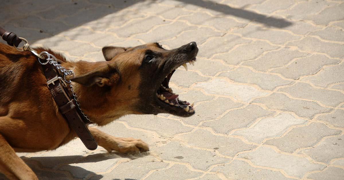 Aggression als Verteidigung