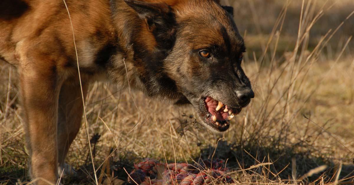 Diesem Hund und seinem Spielzeug sollte man nicht zu nahe kommen