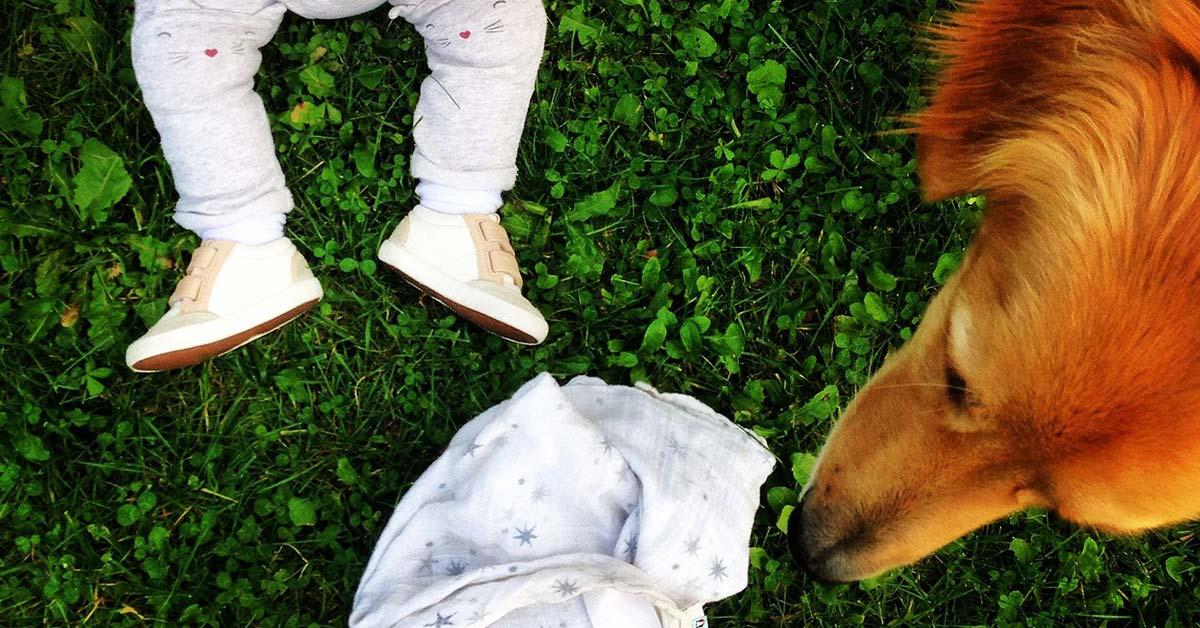 Hunde, die Kinder erziehen - ein No Go