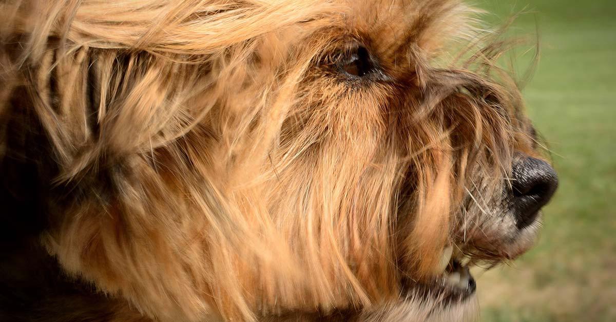 Missverständnisse zwischen Hunden wegen Rassenunterschieden