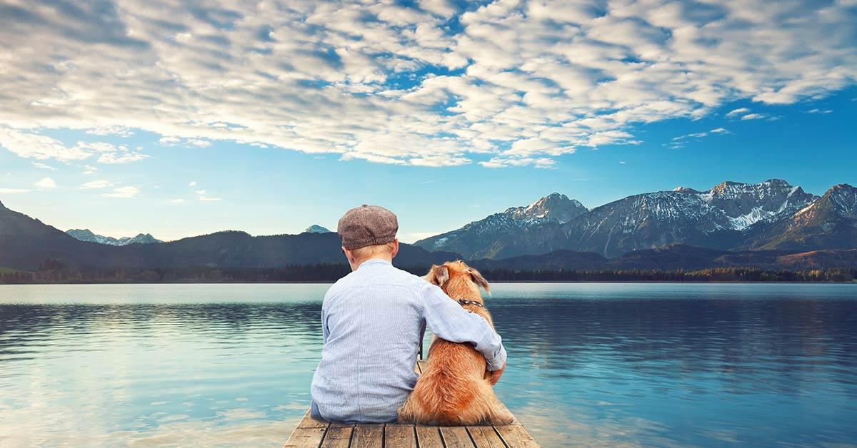 Hunde wirklich verstehen - Ausbildung Hundetrainer bei Akademie Hund