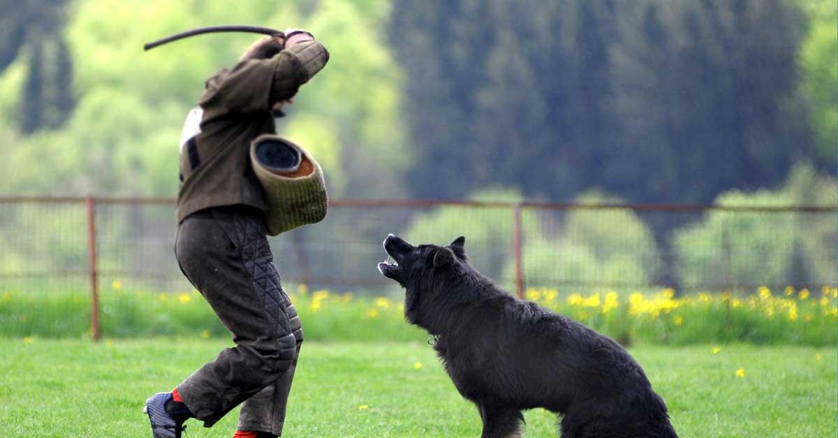 Gebrauchshund, Schutzdienst, Hund schlagen