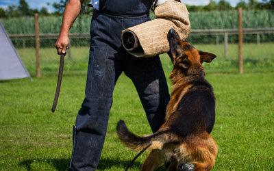 Hunde schlagen im Namen des Gesetzes?