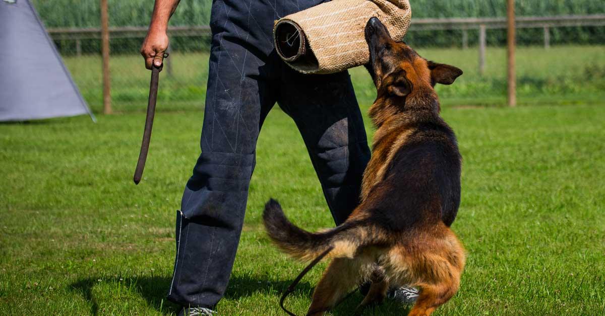 Gewalt im Schutzhunddienst gegen Hunde, Polizei prügelt Hund