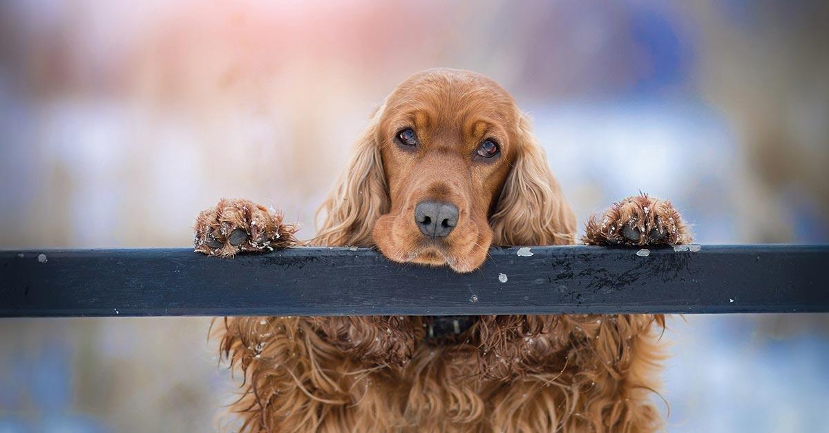 Belohnung im Hundetraining nicht vergessen!
