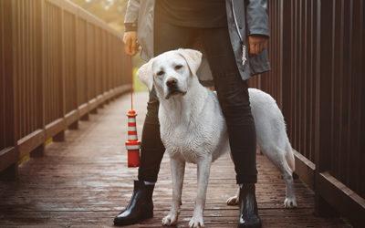 Gastartikel: Traumjob Hundetrainer? 5 Tipps für deinen erfolgreichen Start